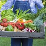 Bio lebensmittel online kaufen - Bio Online-Shops
